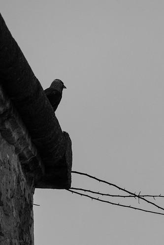 Mr Oiseau surveille la cour