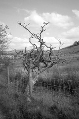 Photo of [Film] Twisted Tree