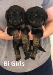 Irma Bi Girls pic 2 4-9