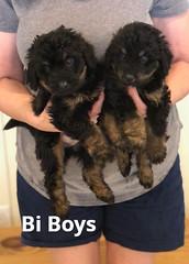 Rosie Bi Boys pic 3 4-9