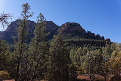 The Woods and the Mountains of Coconino National Forest