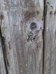 April 9: Wooden Fence - Number 99