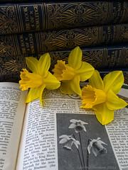 Photo of 2021 04 03 - daffodil still life