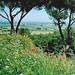 Landscape around Castel del Monte