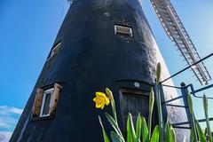 Holgate Windmill, March 2021 - 04