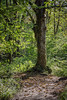 Birks of Aberfeldy 2019 - 2619.jpg