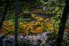 Birks of Aberfeldy 2019 - 2597.jpg