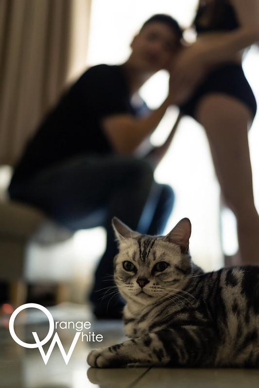 女攝影師,婚攝,孕婦寫真,孕婦照,孕媽咪,寵物寫真,橘子白,貓,工作室,板橋,台北,推薦,到府拍攝