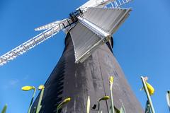 Holgate Windmill, March 2021 - 03