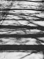 Photo of Shadows