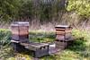 Hidden beehives