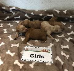 Noel Girls 4-10