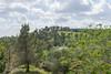 Tzora Forest