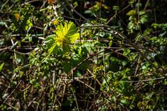 Photo of Leaf