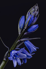 Photo of Bluebells 06