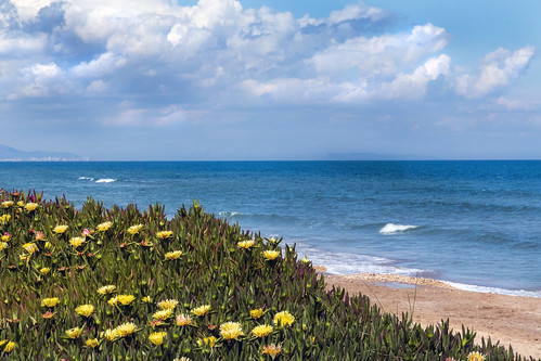 IMG_3444 Spring on the Costa Blanca - Deveses