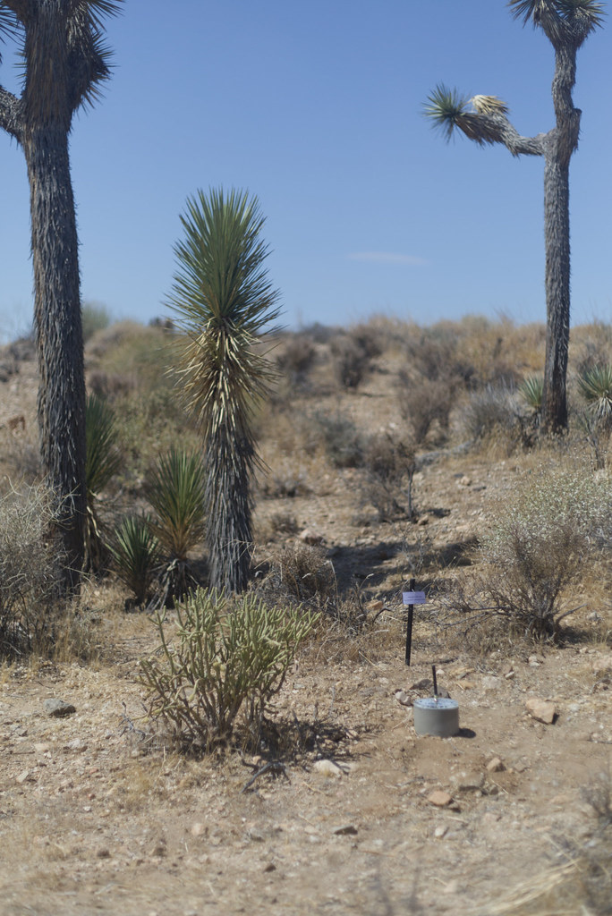 Study for a Camera on a Plot of Land in the Desert