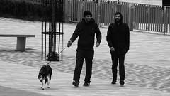 Photo of Dog Walking His Humans