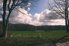Landschaft - Landscape | Schleswig-Holstein | 2021:04:13 11:21:45