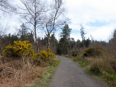 Photo of Chacefield Wood, near Denny