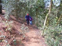Photo of Peckforton Hill, Higher Burwardsley, Cheshire.
