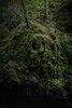 Birks of Aberfeldy 2019 - 2631.jpg