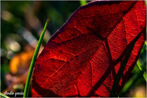 Sobre el pasto otoñal / On the autumn grass