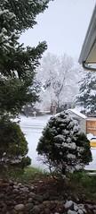 April 15, 2021 - Snowy scene in Thornton. (Renee Franz)