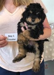 Rosie Tri Boy 1 pic 4 4-16