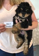 Rosie Tri Boy 1 4-16