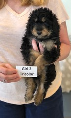 Rosie Tri Girl 2 4-16