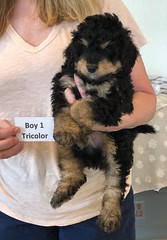 Rosie Tri Boy 1 pic  2 4-16