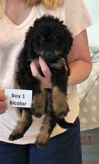 Rosie Bi Boy 1 pic 2 4-16