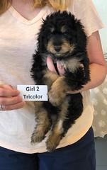 Rosie Tri Girl 2 pic 4 4-16