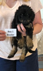 Rosie Bi Boy 1 pic4 4-16