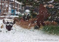 April 15, 2021 - The snow begins. (ThorntonWeather.com)
