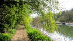 Photo of THE THAMES PATH