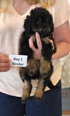 Rosie Bi Boy 1 pic 3 4-16