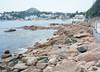 Seaweeds Washed On Rocky Bank