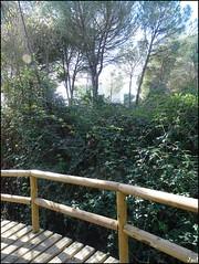 El Acebrón - Parque (Nacional de Doñana) - Huelva (Spain)