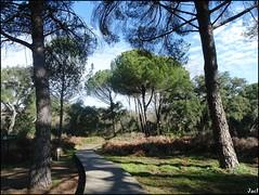 Sendero del Acebrón (Parque Nacional de Doñana)- Huelva( Spain)