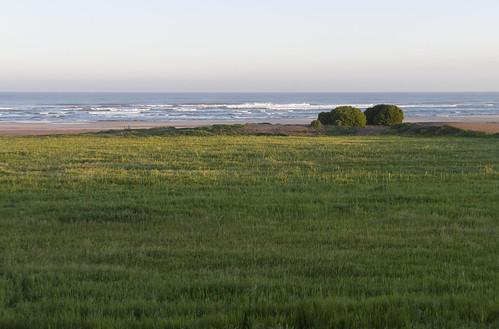 Meadow near Atlantic Ocean, 20.03.2015.
