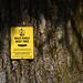 210417 Bald Eagle tree tag