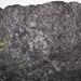 Fossiliferous cannel coal (Upper Freeport Coal, Middle Pennsylvanian; Diamond Coal Mine, Linton, Ohio, USA) 5