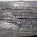 Fissile cannel coal (Upper Freeport Coal, Middle Pennsylvanian; Diamond Coal Mine, Linton, Ohio, USA) 2