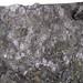 Fossiliferous cannel coal (Upper Freeport Coal, Middle Pennsylvanian; Diamond Coal Mine, Linton, Ohio, USA) 4
