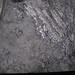 Cannel coal (Upper Freeport Coal, Middle Pennsylvanian; Diamond Coal Mine, Linton, Ohio, USA) 2