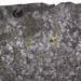 Fossiliferous cannel coal (Upper Freeport Coal, Middle Pennsylvanian; Diamond Coal Mine, Linton, Ohio, USA) 2
