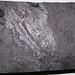 Cannel coal (Upper Freeport Coal, Middle Pennsylvanian; Diamond Coal Mine, Linton, Ohio, USA) 1