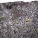 Fossiliferous cannel coal (Upper Freeport Coal, Middle Pennsylvanian; Diamond Coal Mine, Linton, Ohio, USA) 3